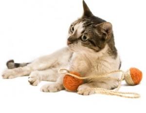 kattenspeelgoed_animal_king